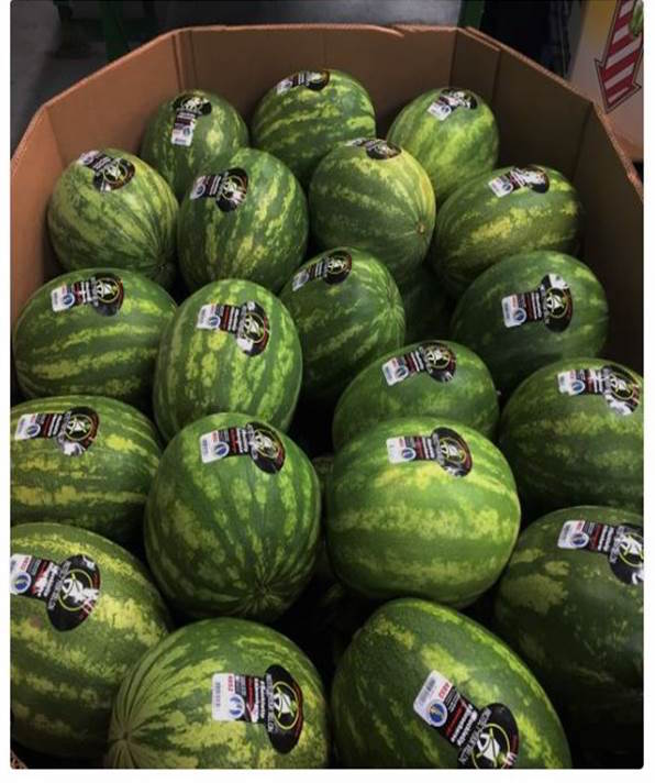 Office of Highway Safety_Protect Your Melon_ watermelon campaign photo b...