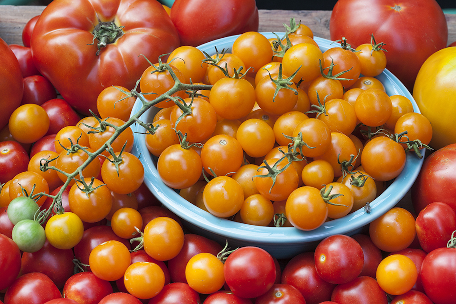 Hoy En Delaware News Select The Best Tomatoes For Your